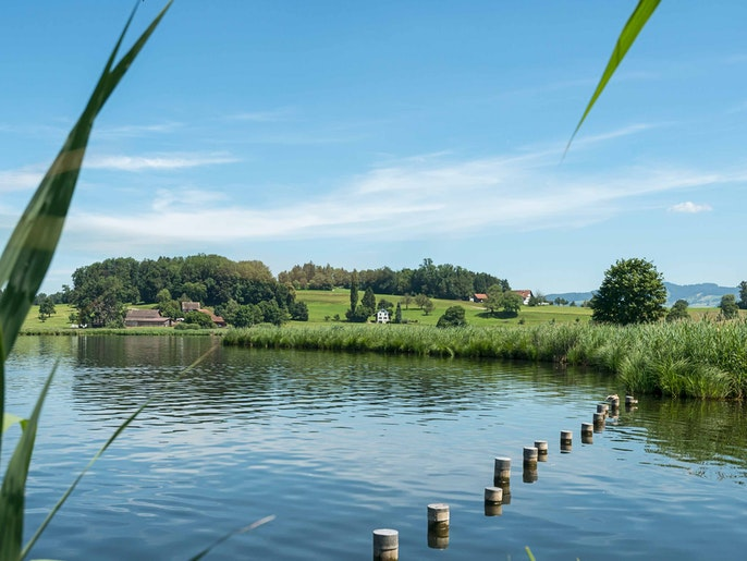 LÜTZELSEE – SWIMMING LAKE WITH FLOATING ISLANDS